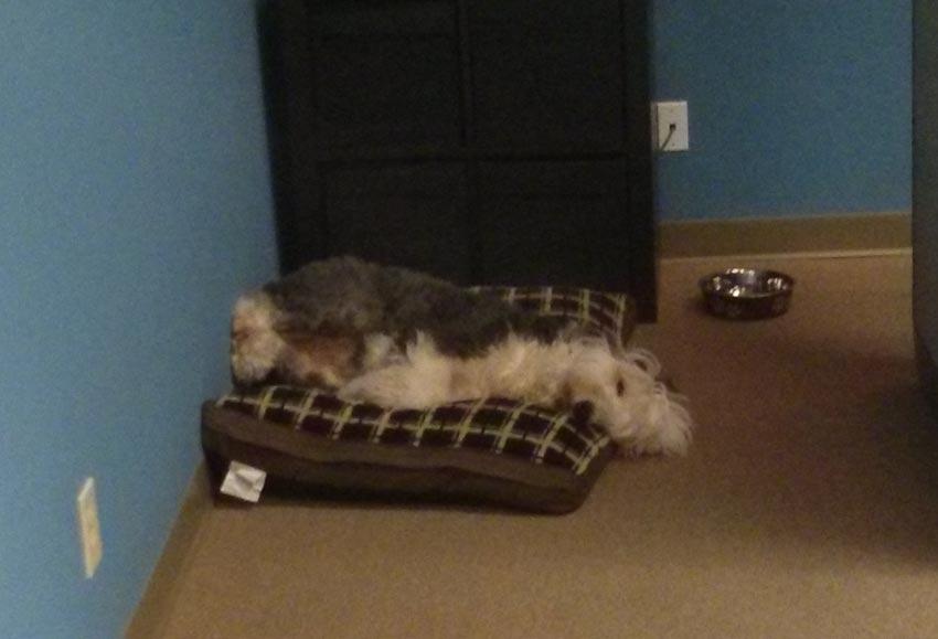 sleeping-ellie.jpg